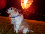 "Nattie & The Hot Air Balloon or as she would put it: ""Me sitting near some big noisy fire breathing hot air monster"""